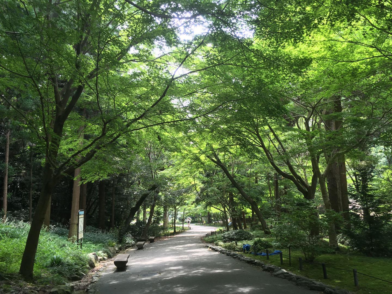 hoshigaokamon-07