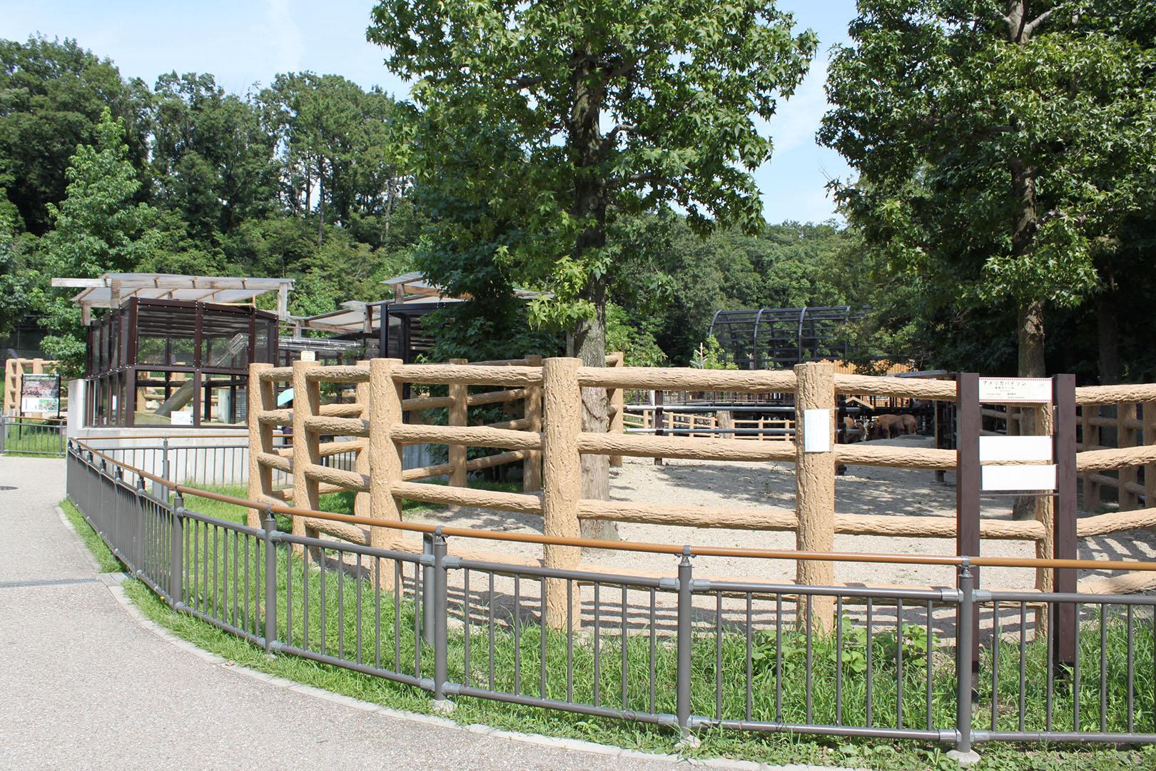 bison-prairie